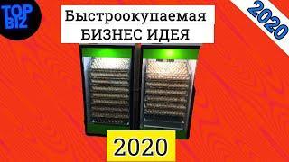 Бизнес идеи 2020. Выращивание бройлеров. Рентабельность, условия, оборудование, окупаемость.Топ Биз