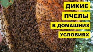 Разведение диких пчел в домашних условиях как бизнес идея | Пчеловодство | Дикие пчелы