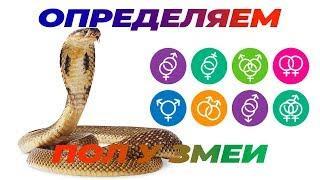 Как определить пол змеи
