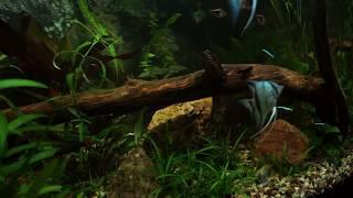 SMART LED освещение аквариума. Отзыв о контроллере Smart S2 Pro