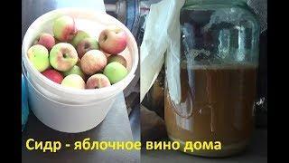Сидр: домашнее яблочное игристое вино из летних яблок