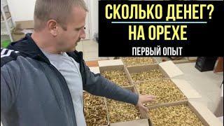 Подробный бизнес план по чистке грецкого ореха из моего опыта! Сколько я заработал?