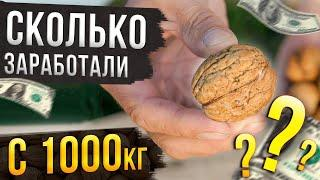 Сколько можно заработать на переработке 1000кг грецкого ореха? Наш опыт!