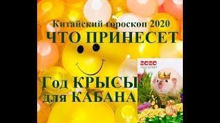 Год КРЫСЫ для КАБАНА. Китайский гороскоп 2020. Таропрогноз.