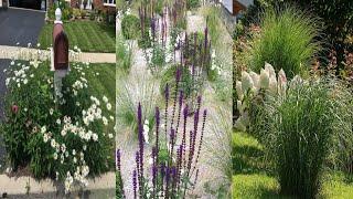 Ландшафтные растения для красивого участка
