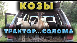 Солома козы и трактор