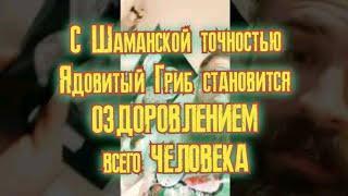 это Волшебство для тебя Радость моЯ - Принимай  дозированный Мухомор - церемония Шаманов Руси