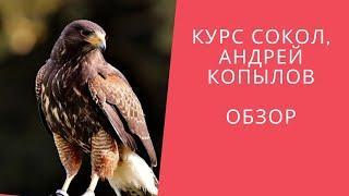 Курс Сокол, Андрей Копылов  Обзор курса