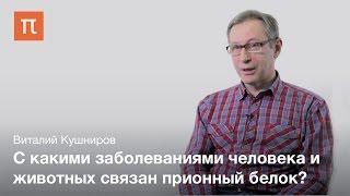 Общие свойства прионов - Виталий Кушниров