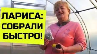 Отзыв о теплице с двойной дугой г. Брянск, Отрадное