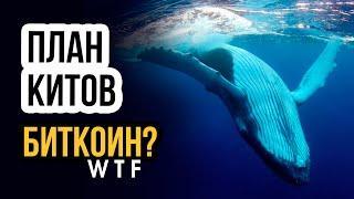 Прогноз Биткоин! Анализ сил китов на рынке! новости биткоин BTC
