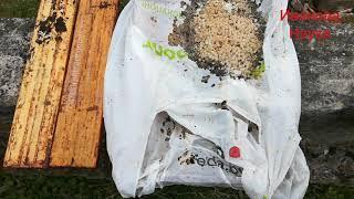Опять развод на деньги? Стоит ли так сильно беспокоиться о пластиковых пакетах?