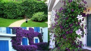 Садовый дизайн. Идеи