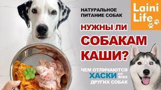 Углеводы в рационе собак