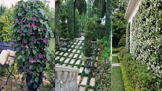 Дизайн красивого сада и двора