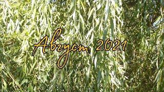 Август 2021