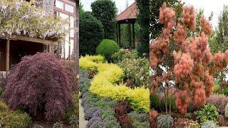 Красивые растения для стильного садового дизайна